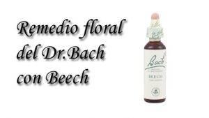 remedio floral con beech