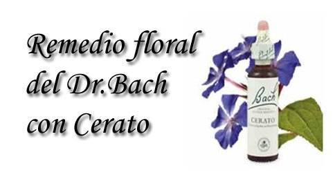 remedio floral con cerato