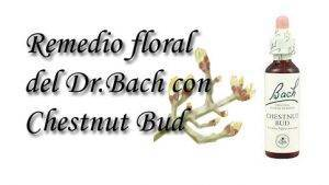 remedio floral con chestnut bud