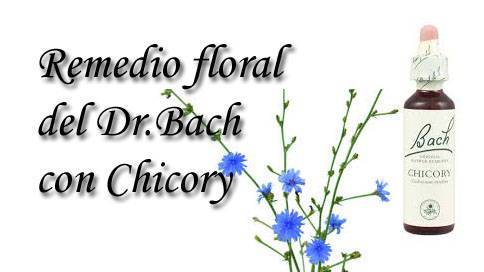 remedio floral con chicory