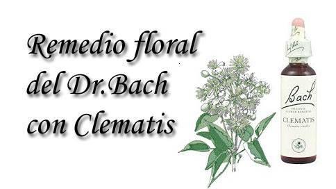 remedio floral con clematis
