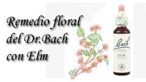 remedio floral con elm