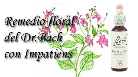 remedio floral con impatiens