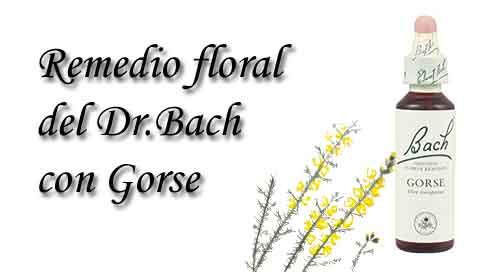 remedio floral con gorse