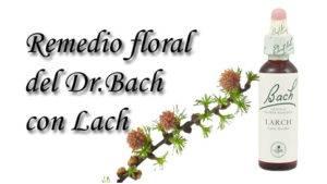 remedio floral con lach