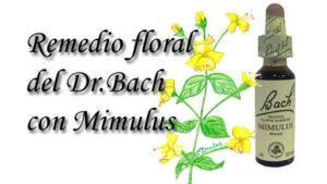 remedio floral con mimulus
