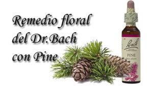 remedio floral con pine