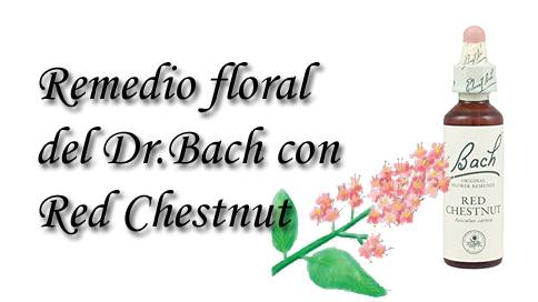 remedio floral con red chestnut