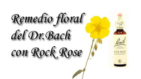 remedio floral con rock rose