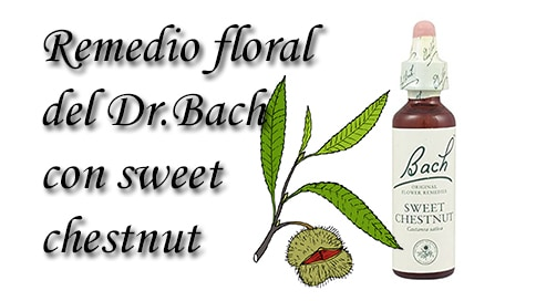 remedio floral con sweet chetnut