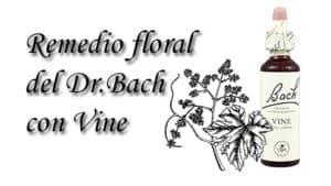 remedio floral con vine
