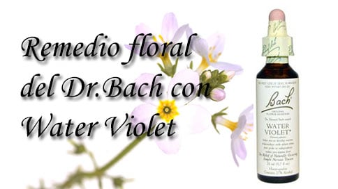 remedio floral con water violet