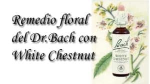 remedio floral con white chestnut