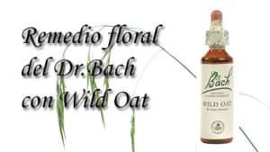 remedio floral con wild oat