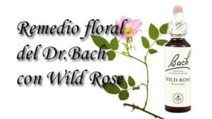 remedio floral con wild rose