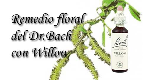 remedio floral con willow